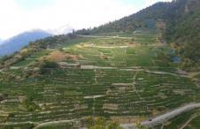 Vini Svizzeri, Vallese, Visperterminen