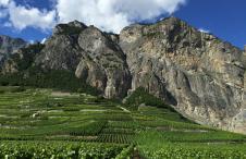 Swiss Wine Valais Square Meal
