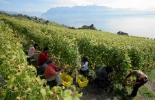Swiss Wine, Lavaux, Terroir