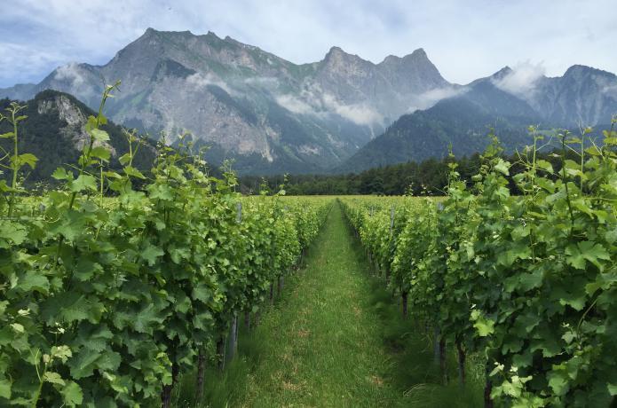 Deutschschweiz Graubunden Weinberg Swisswine