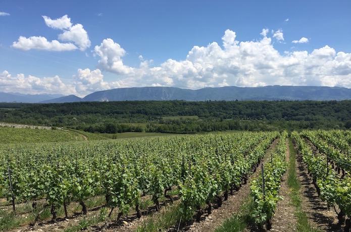 Vin Suisse Geneve Saleve