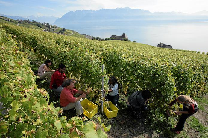 Swiss Wine, Lavaux, Terroir