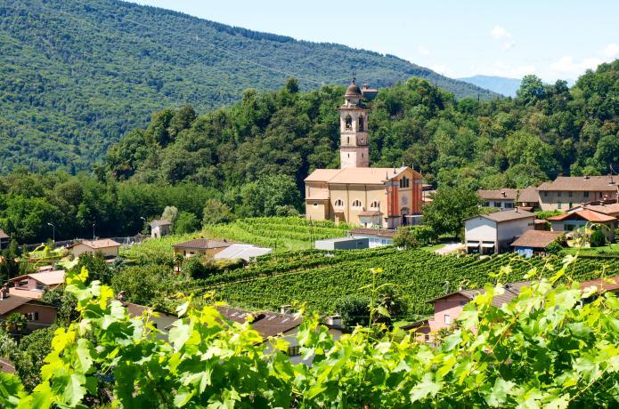 Swisswine Vini Svizzeri Ticino Estate